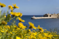 Malta Valletta lighthouse and flowers. View trough yellow flowers on one of the lighthouses in Valletta, Malta Royalty Free Stock Photography