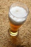 Malta y cerveza Imagen de archivo libre de regalías