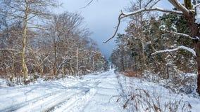 Maltakva park in winter time, Poti, Georgia.  Stock Photography