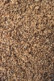 Malted barley grains stock photography