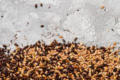 Malted grain closeup. Mixed varieties of malted grain on a gray background. close-up. top view. flat lay. Series of photos. space stock photos
