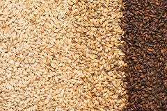 Malted grains. Various Malted barley for the use of brewing beer Stock Photos