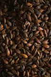 Malted grains. Malted black barley for the use of brewing beer Royalty Free Stock Photo
