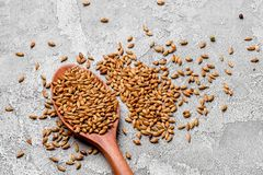 Malted grains in a wooden spoon closeup. Mixed varieties of malted grain on a gray background. close-up. top view. Flat lay. series of photos. space royalty free stock photos