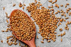 Malted grains in a wooden spoon closeup. Mixed varieties of malted grain on a gray background. close-up. top view. Flat lay. series of photos. space stock image