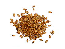 Malted and Roasted Barley on White Background Royalty Free Stock Photo