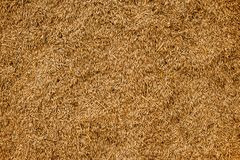 Malted Wheat Grain texture. Rich Harvest concept. Grains close-up.  royalty free stock photo