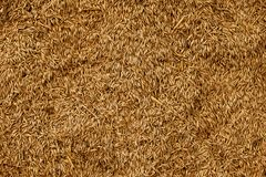 Malted Wheat Grain texture. Rich Harvest concept. Grains close-up.  royalty free stock image