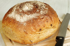 Malted wholemeal loaf. With a bread knife Stock Images