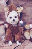 Maltees puppyrendier Royalty-vrije Stock Afbeeldingen