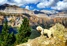 Maltese adventures. Mountain landscape and puppy Stock Photo