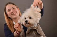 Maltese and blonde girl. Cute Maltese puppy wearing elegant grey coatee and beautiful blonde girl playing with dog's ears, studio shot Royalty Free Stock Images