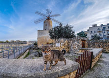 Maltese cat with traditional windmill in the background. Focus o. N the windmill Royalty Free Stock Photo