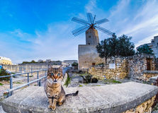 Maltese cat with traditional windmill in the background. Focus o. N the cat Stock Images