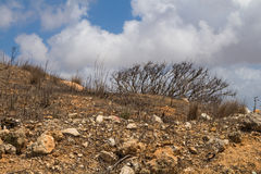 Maltese country with a cloudy sky. Dry soil with many stones, typical for the island Malta. Coastal part of the island. Intense white clouds on the blue sky Royalty Free Stock Image