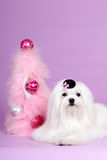 Maltese dog in hat Christmas. Maltese dog in hat lying next to a glamorous Christmas tree Royalty Free Stock Images