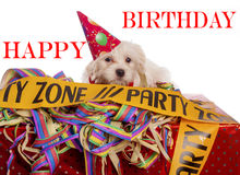 Maltese dog with party hat. With white background Royalty Free Stock Photo