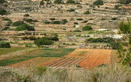 Maltese landscape, Malta, Landscape Countryside Scenery In Malta, cultivated fields in Malta,panoramic view,maltese nature. Maltese landscape on spring time Stock Photo