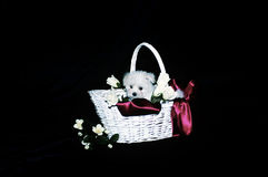 Maltese Puppy. White Maltese puppy snuggled in a decorated white wicker basket Royalty Free Stock Photo