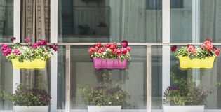 Maltese window decorated with flowers. Building with modern window decorated with fresh flowers on Malta Stock Image