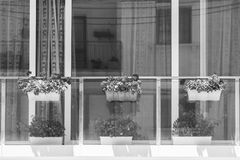 Maltese window decorated with flowers. Building with modern window decorated with fresh flowers on Malta. Black and white picture Stock Photos