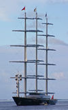 Maltesischer Falke Stockfotografie