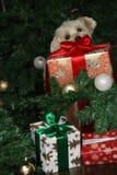 Maltesisk hund och stor julklapp Arkivfoto
