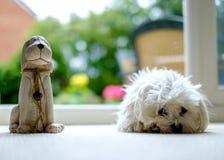Maltesisk hund och vän Arkivbild