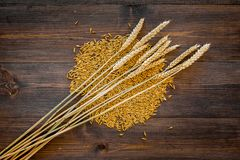 Malting barley. Grains and ears on dark wooden background top view copyspace. Malting barley. Grains and ears on dark wooden background top view Stock Photo