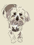 Maltipoo puppy. Maltese and poodle mixed breed puppy drawn in a linear style Stock Image
