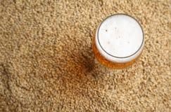 Malto e birra Fotografie Stock Libere da Diritti