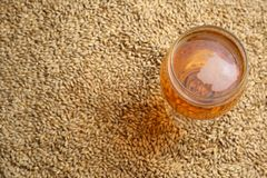 Malto e birra Fotografia Stock Libera da Diritti