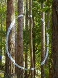 Malujący las w Oma, Baskijski kraj, biały okrąg zdjęcia royalty free