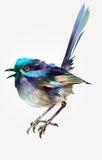 Malujący jaskrawy odosobniony ptasi czarodziejski strzyżyk ilustracja wektor
