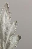 Malujący liścia monotone zakończenie up Zdjęcie Royalty Free