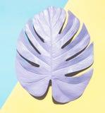 Malujący monstera liść z ciężkim cieniem Obraz Stock