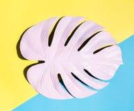Malujący monstera liść z ciężkim cieniem Obraz Royalty Free