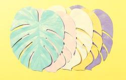 Malujący monstera liście z ciężkim cieniem Fotografia Royalty Free