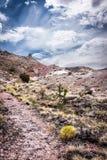 Malujący Pustynny ślad w Arizona Zdjęcie Stock