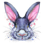 Malujący rysunek z akwarela portretem zwierzęca ssaka królika zając w jaskrawych kolorach Obraz Stock