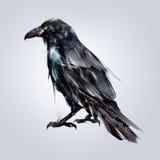Malujący siedzący ptasi kruka plecy Zdjęcia Royalty Free