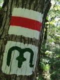 Malujący symbole na drzewie w lesie obrazy stock