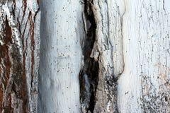 Malujący w wapno drzewnej barkentynie fotografia royalty free