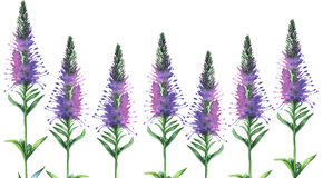 Malujący wildflower kwitnie tło wzór w akwarela stylu Fotografia Royalty Free