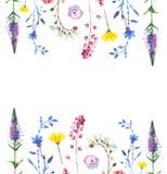 Malujący wildflower kwitnie tło wzór w akwarela stylu Fotografia Stock