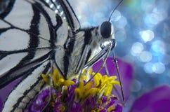 Malujący dama motyl Zdjęcia Stock