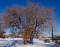 Malujący drzewa Obraz Stock