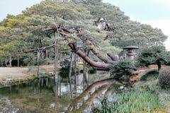 malujący drzewo fotografia royalty free