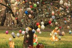 Malujący Wielkanocni jajka na drzewie Fotografia Royalty Free