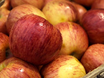 Malus Domestica. The apple is the pomaceous fruit of the perennial Malus Domestica or apple tree Stock Photography